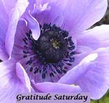 Gratitude Saturday Challenge Badge (with thanks to Eldy) at Loving Life: A Green Journey)