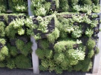 Vertical Planter Filled with Thyme