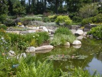 Looking across the pond to the Lerner Garden of the Five Senses